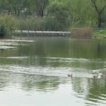 Nanji Pond
